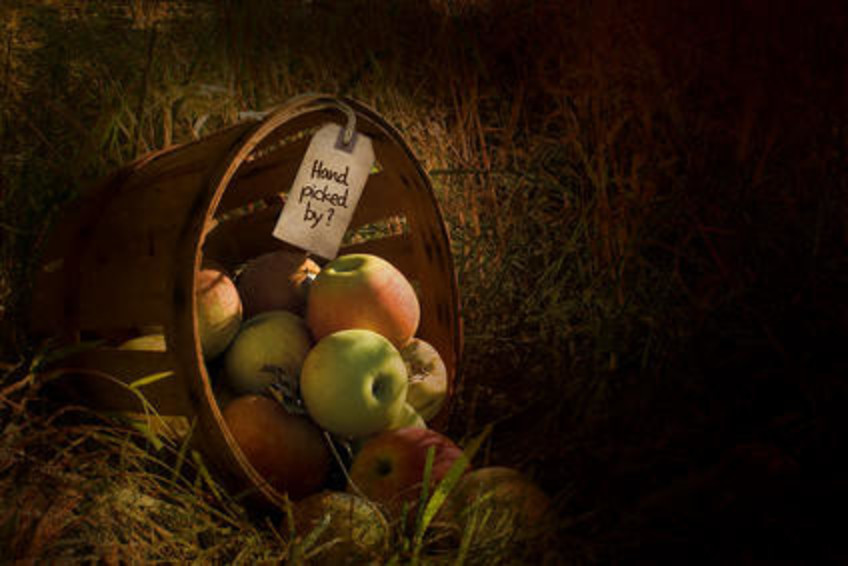 Hand Picked Apples 1200 800 Medium
