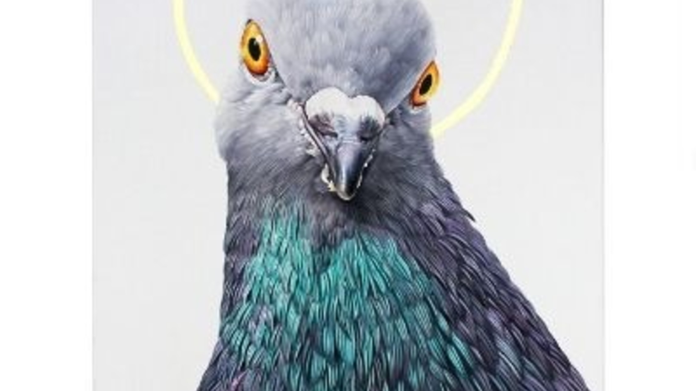 Holy Portland Pigeon 670