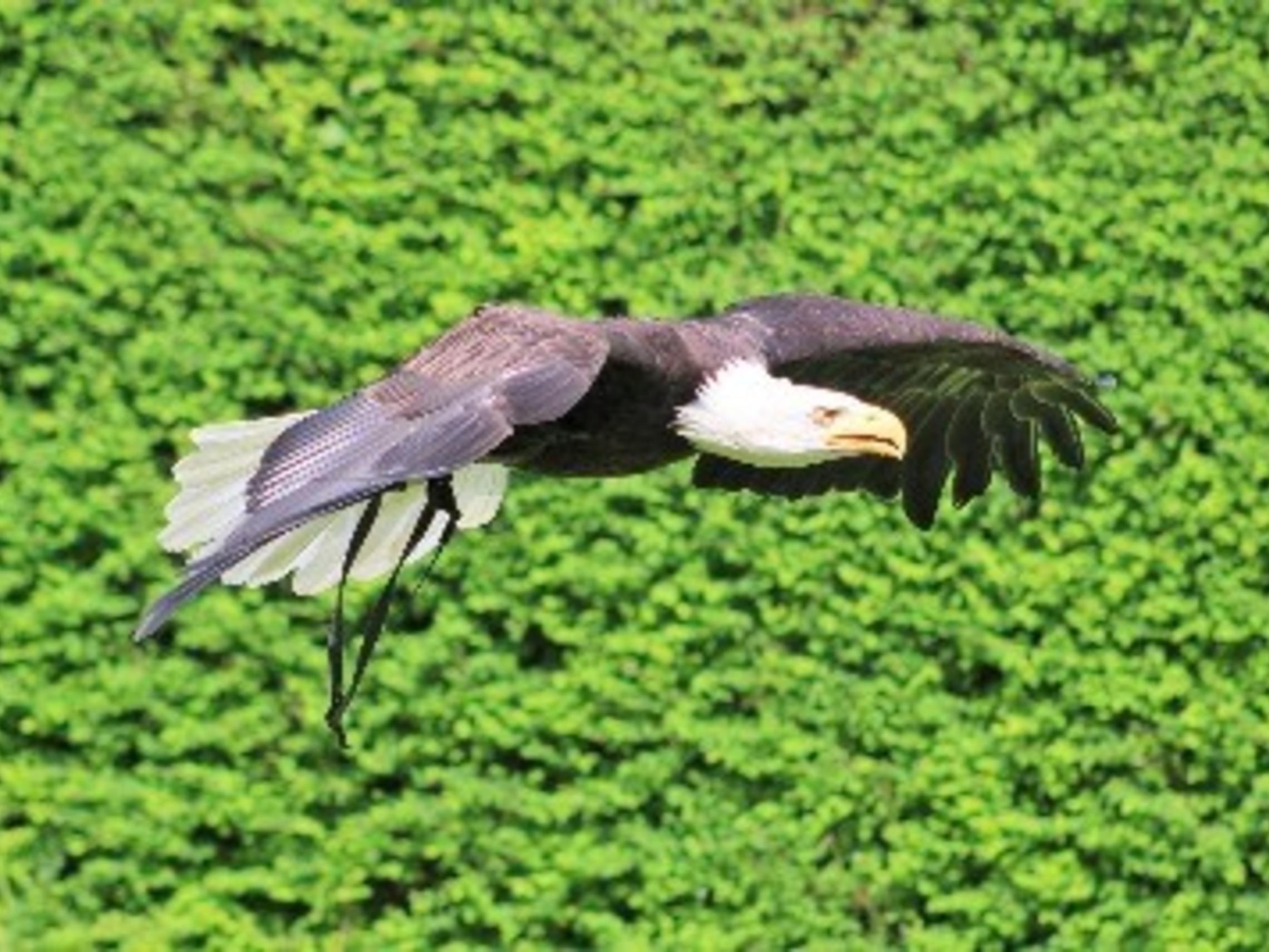 Eagle Top News